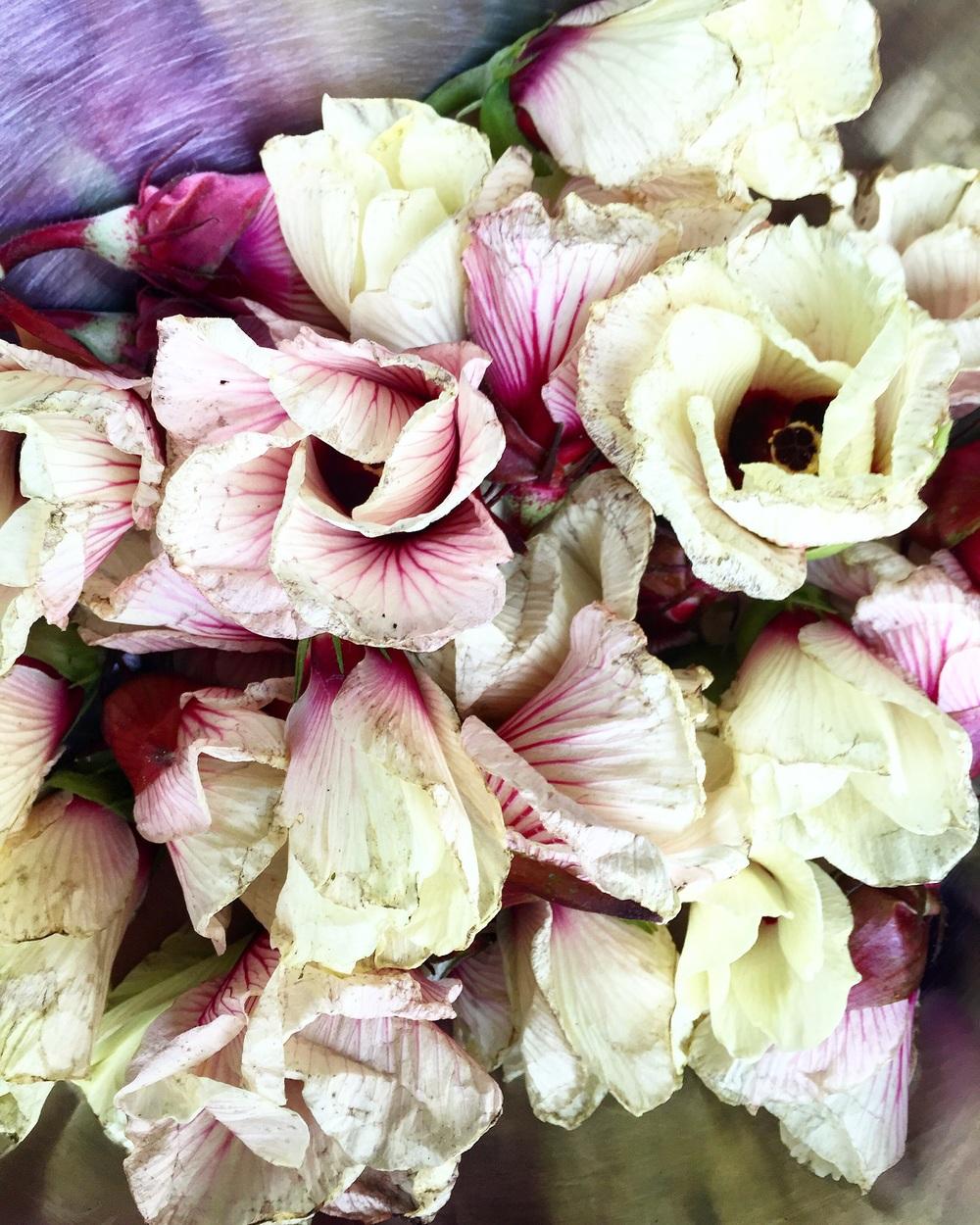 Okra Flowers// Decatur, Georgia