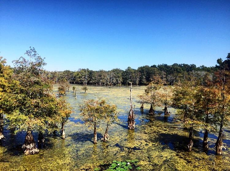 Chicot State Park// Ville Platte, Louisiana