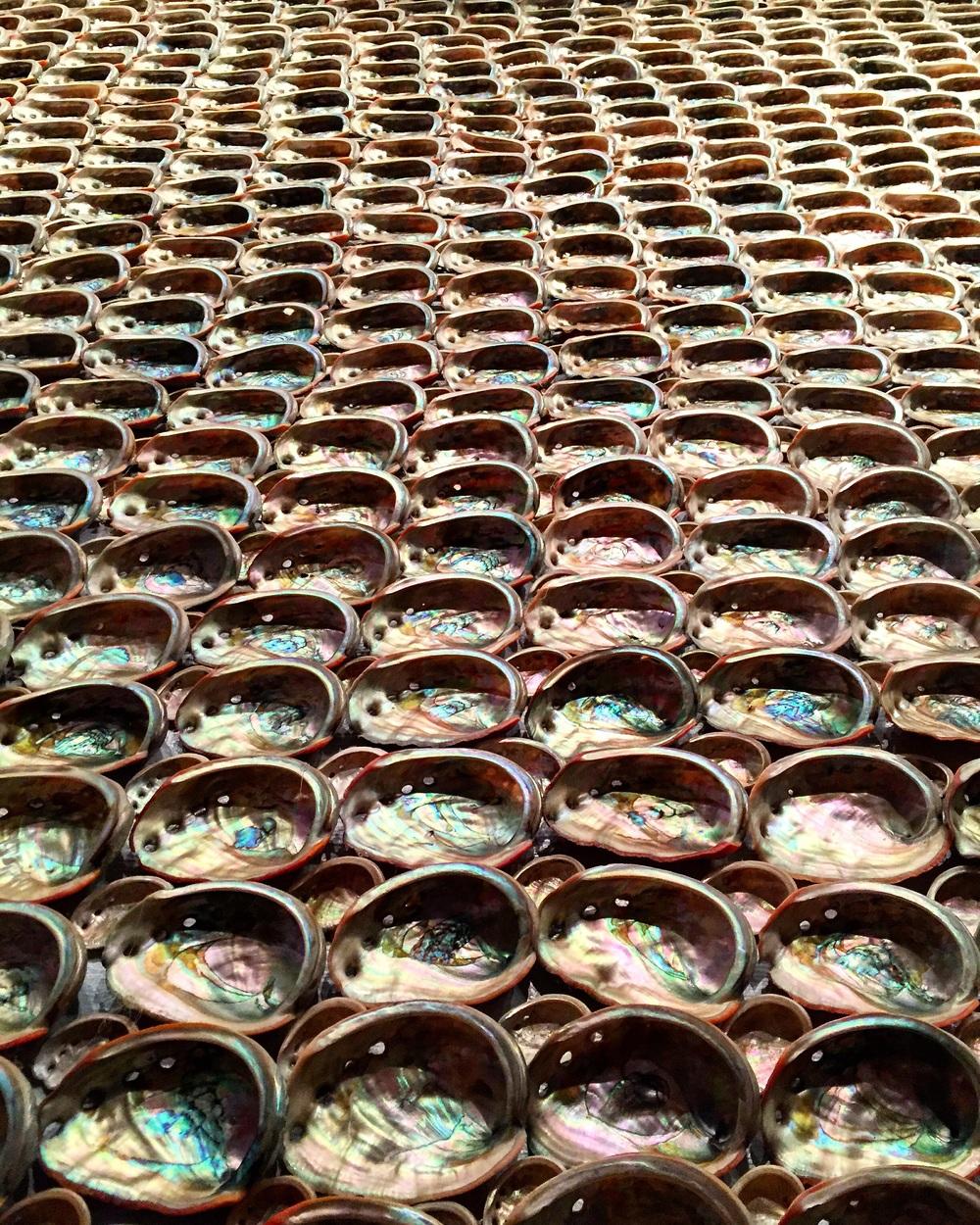 Abalone Disco// Cayucos, California