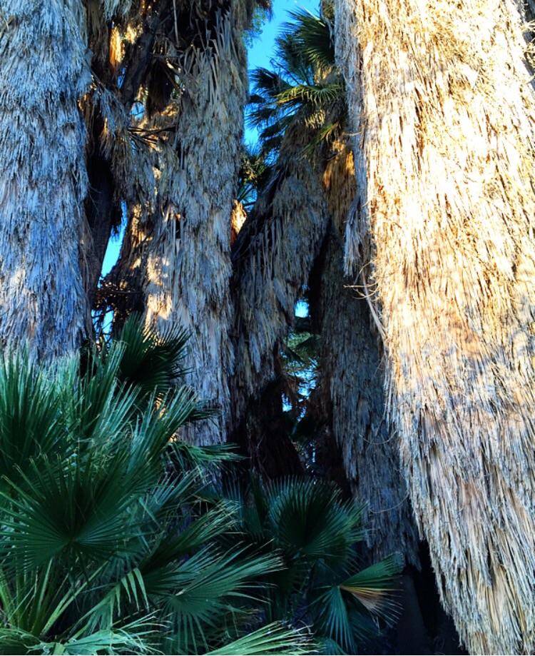 Cottonwood Springs//Joshua Tree