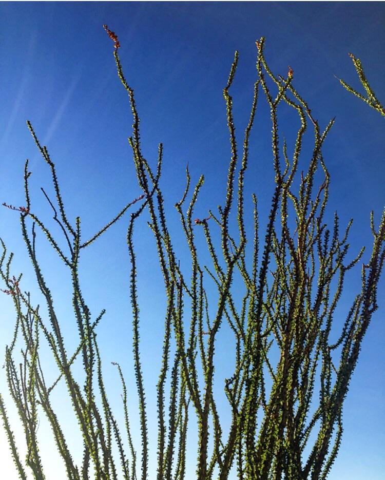 // Joshua Tree, California
