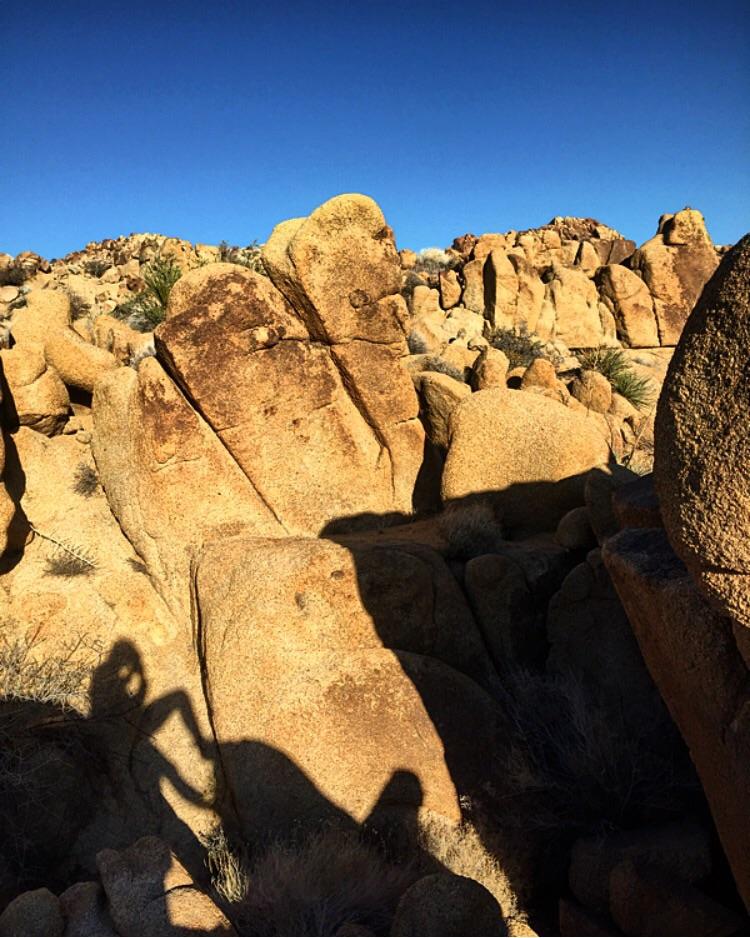 Shadows// Joshua Tree, California
