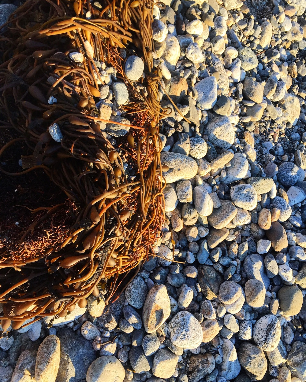 Washed Up// Big Sur, California