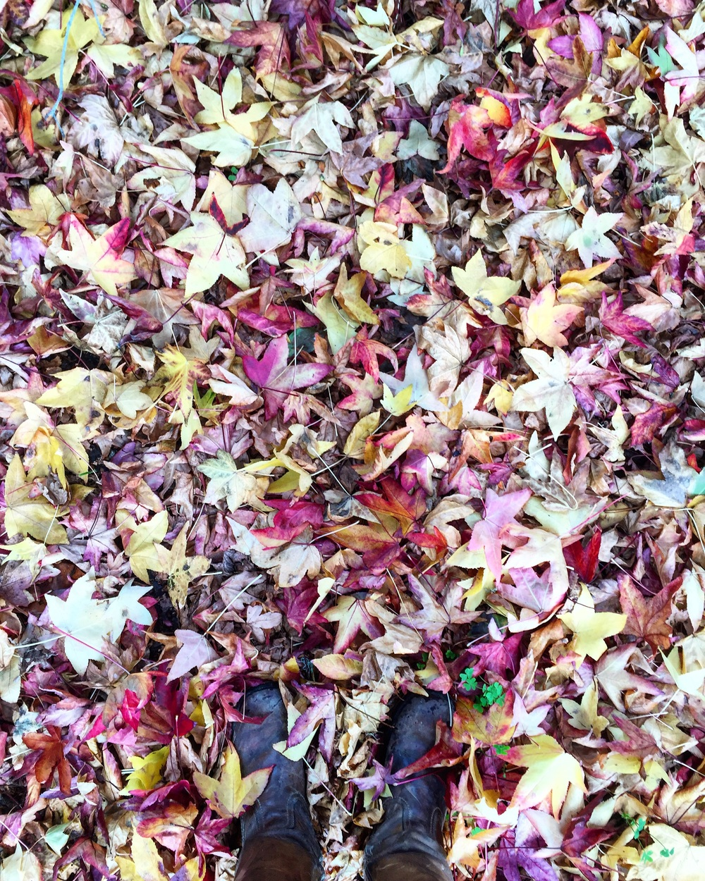 Fall Feelings// Pescadero,California