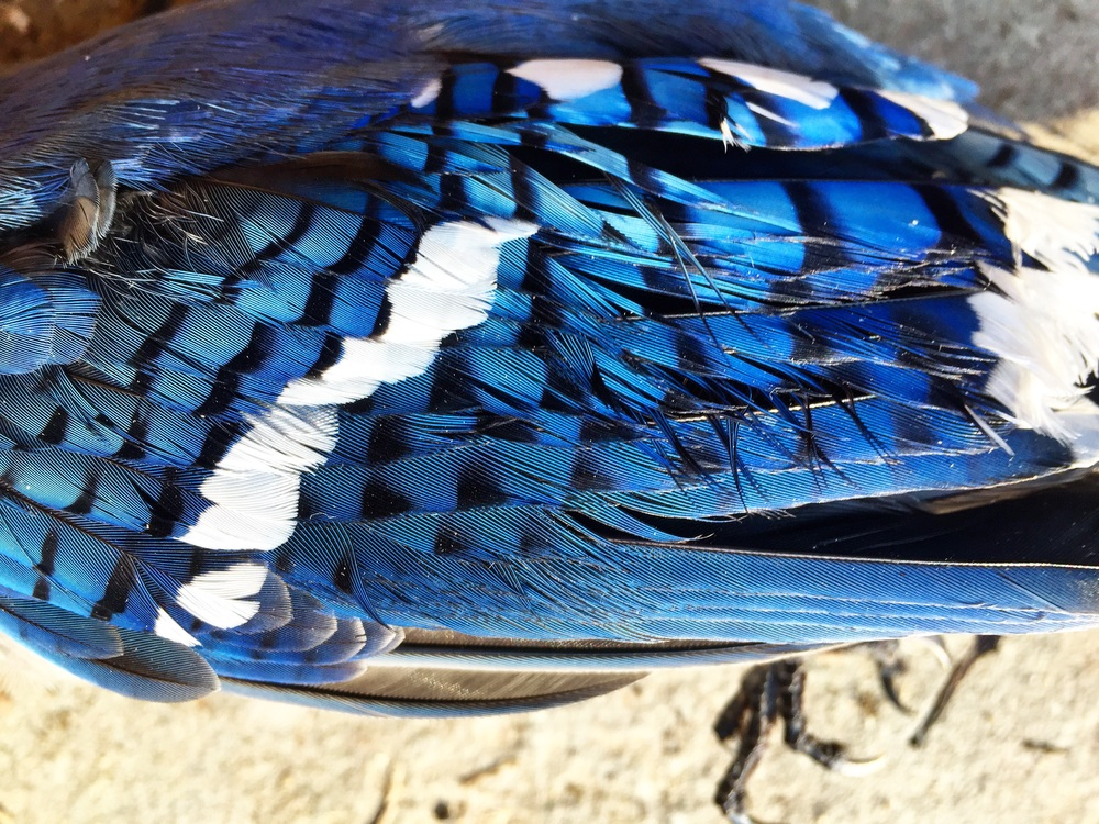 Blue Jay Way// Upper Black Eddy, Pennsylvania