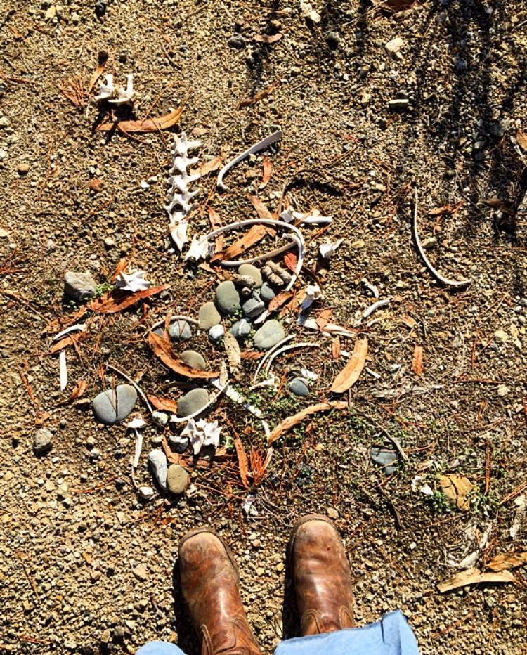 Remains// Big Sur, California