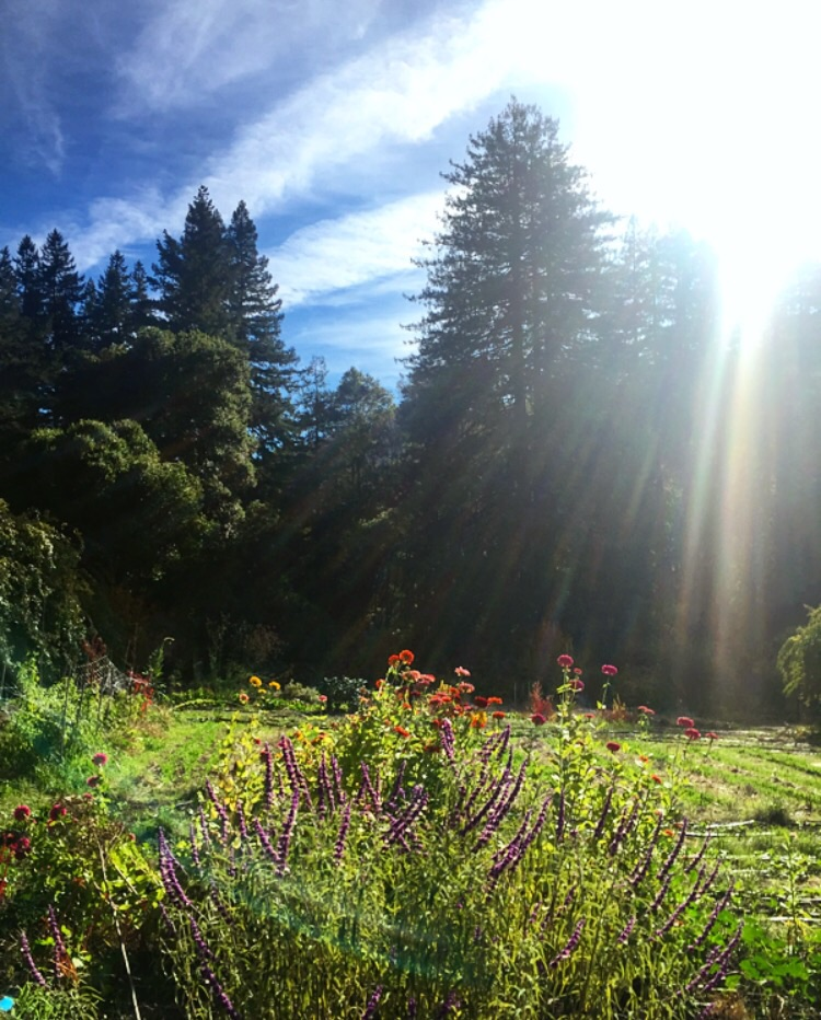 Camp Joy Gardens// Boulder Creek, California