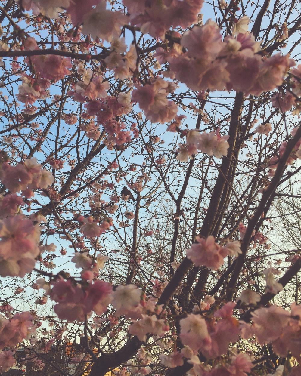 Bloom //Philadelphia Pennsylvania