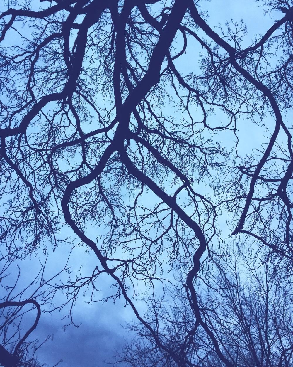 Catalpa Tree// Upper Black Eddy,Pennsylvania