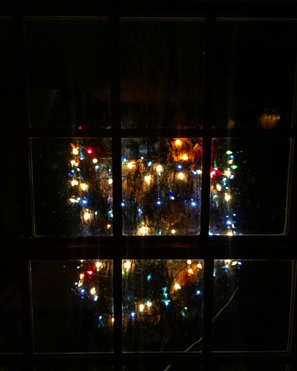 Tree Lights// Upper Black Eddy,Pennsylvania
