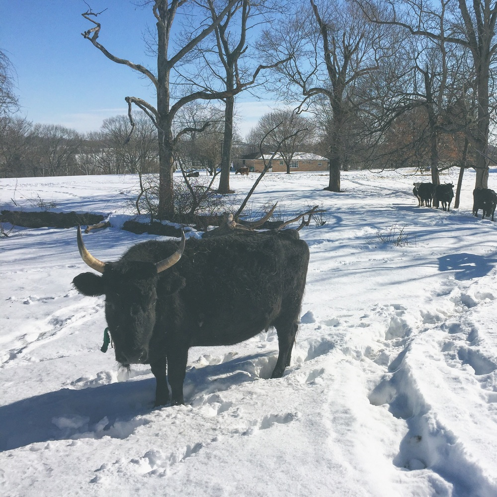 Nutella enjoying the snow at Bobolink Dairy/ /Milford, New Jersey