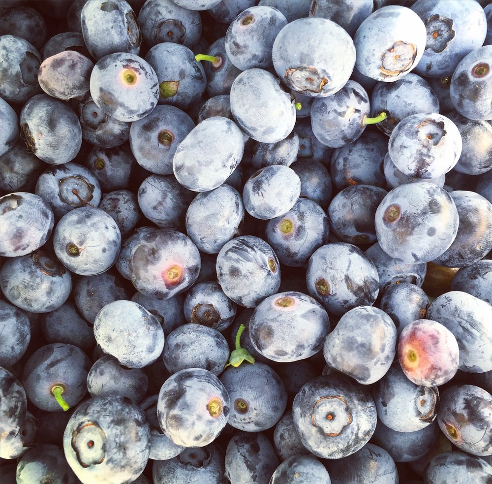 blueberry// Milford, New Jersey