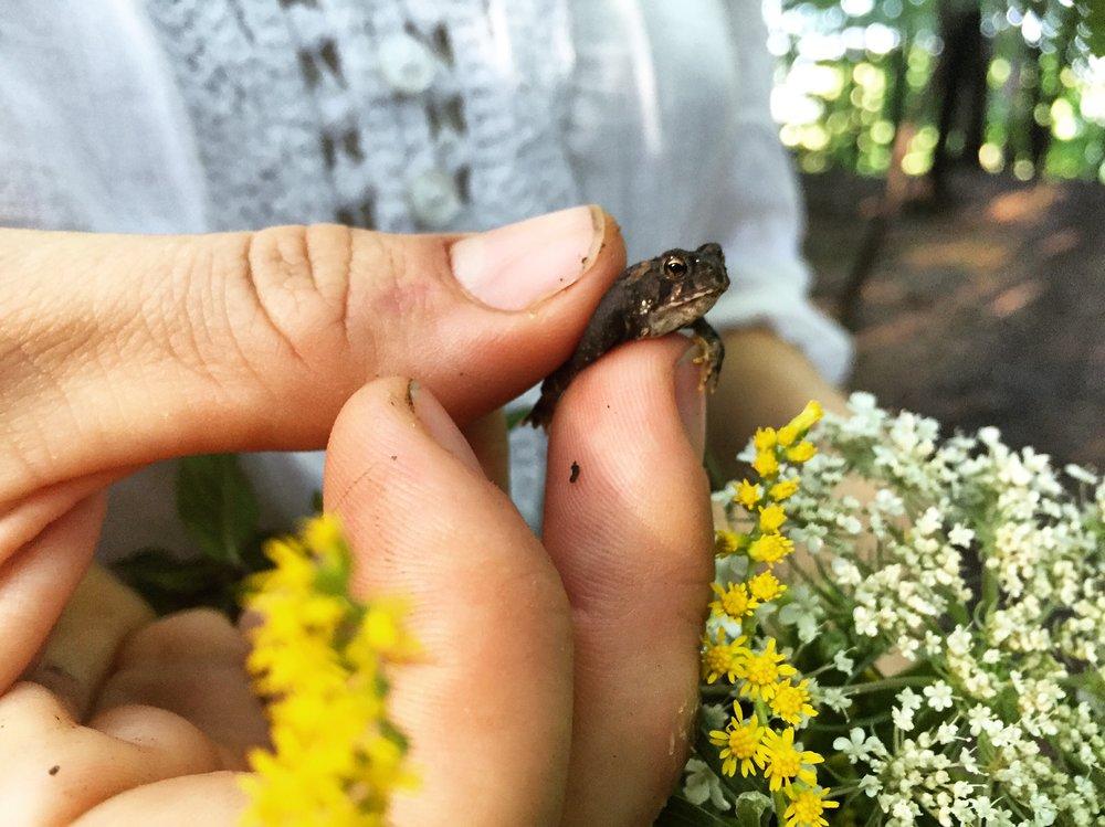 Frog Prince// Cortland, New York