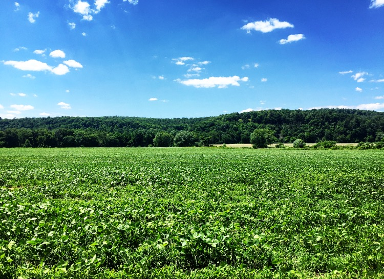 Fields// Kingston, New York