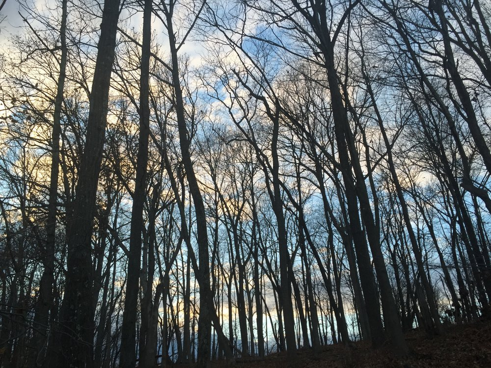 Tree Tops// Pipersville, Pennsylvania