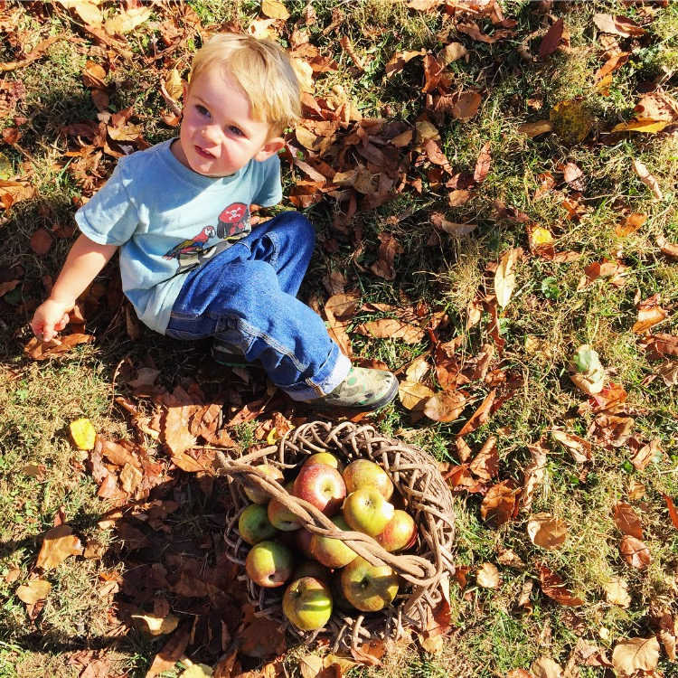 Garnet helping harvest apples//Sandy Mush, North Carolina