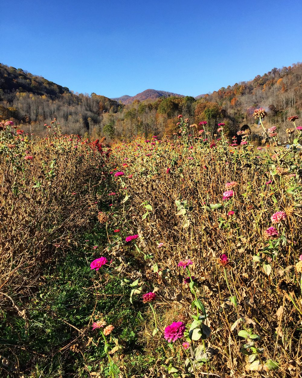 The view at Lady Luck Flower Farm// Sandy Mush, North Carolina