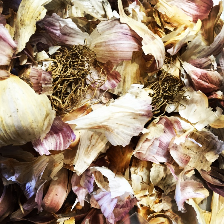 Last Year's Garlic from Heritage Farm// Upper Black Eddy, Pennsylvania