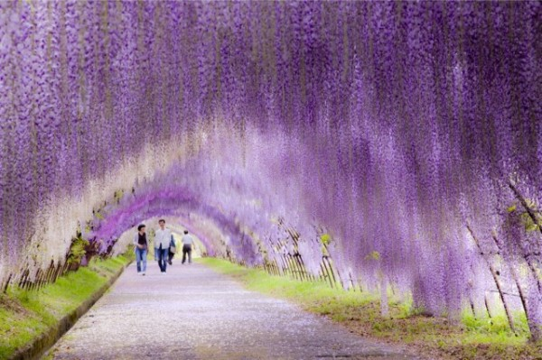 Glycine-Tunnel-Japan-1-600x399.jpg