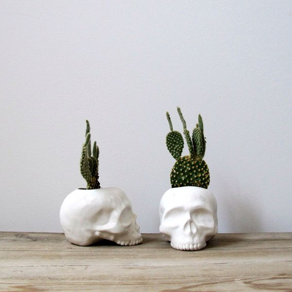 dhla_design_crush_cacti4
