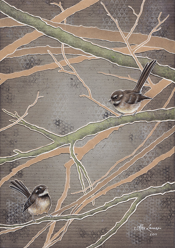 Grey Fantails