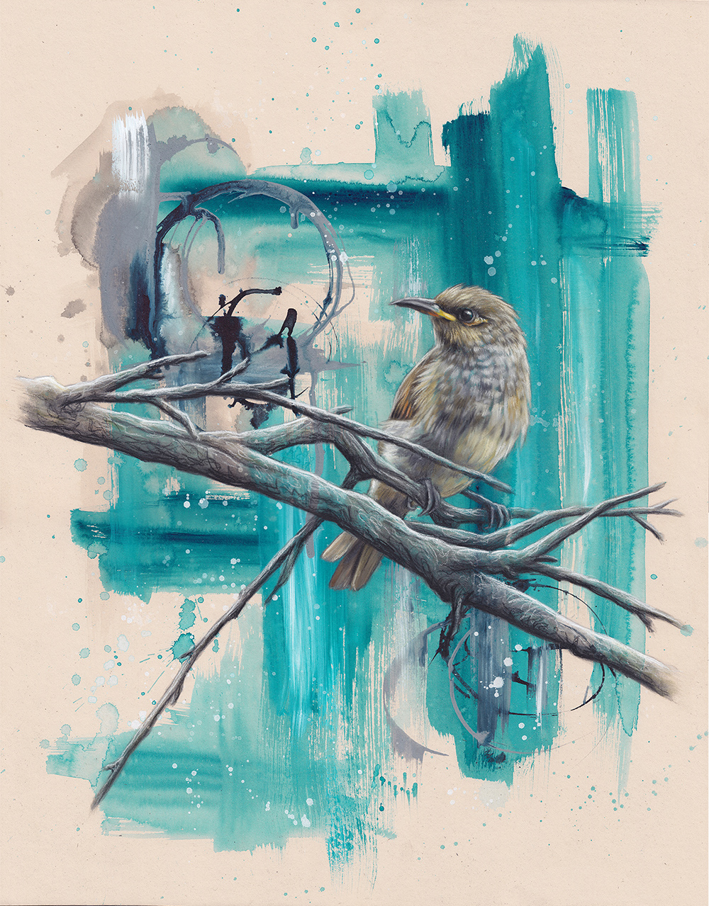 Brown Honeyeater on Turquoise