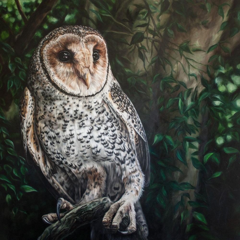 """A Masked Owl Named """"Gorilla"""""""