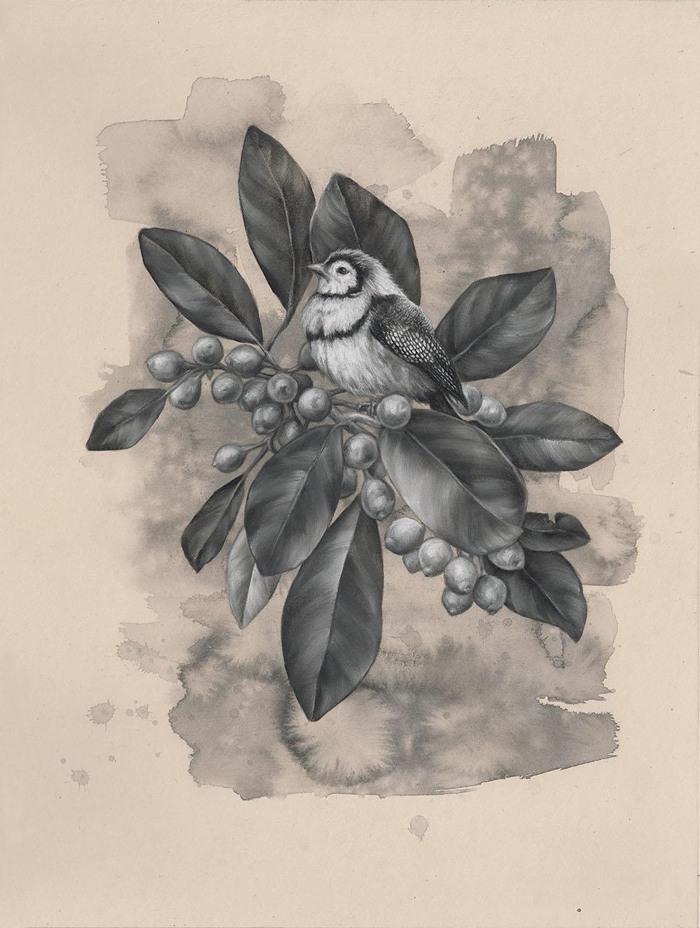 Owl Finch: 6Series 1.3