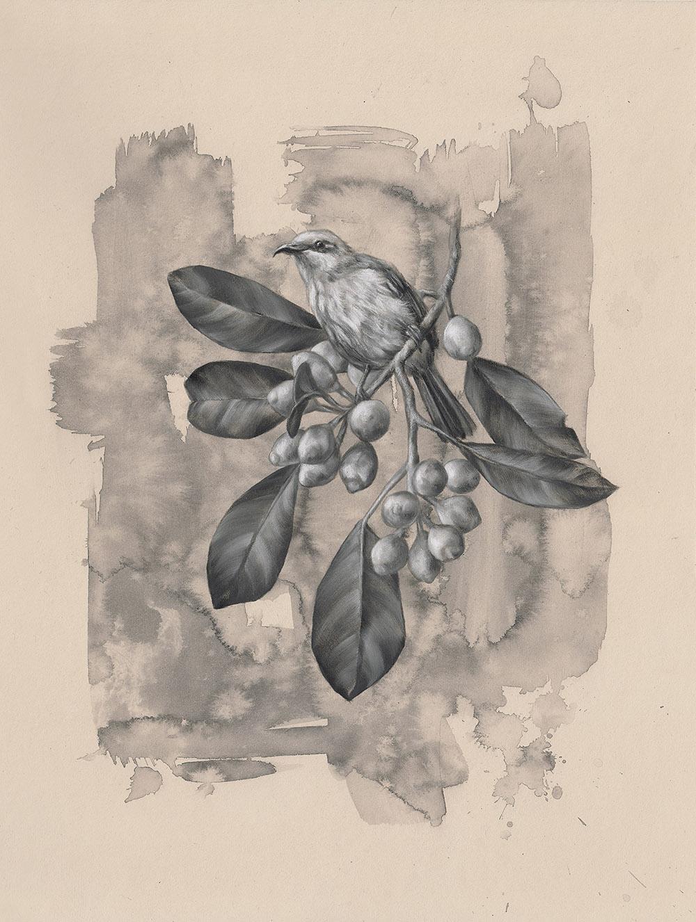 Brown Honeyeater: 6Series 1.5