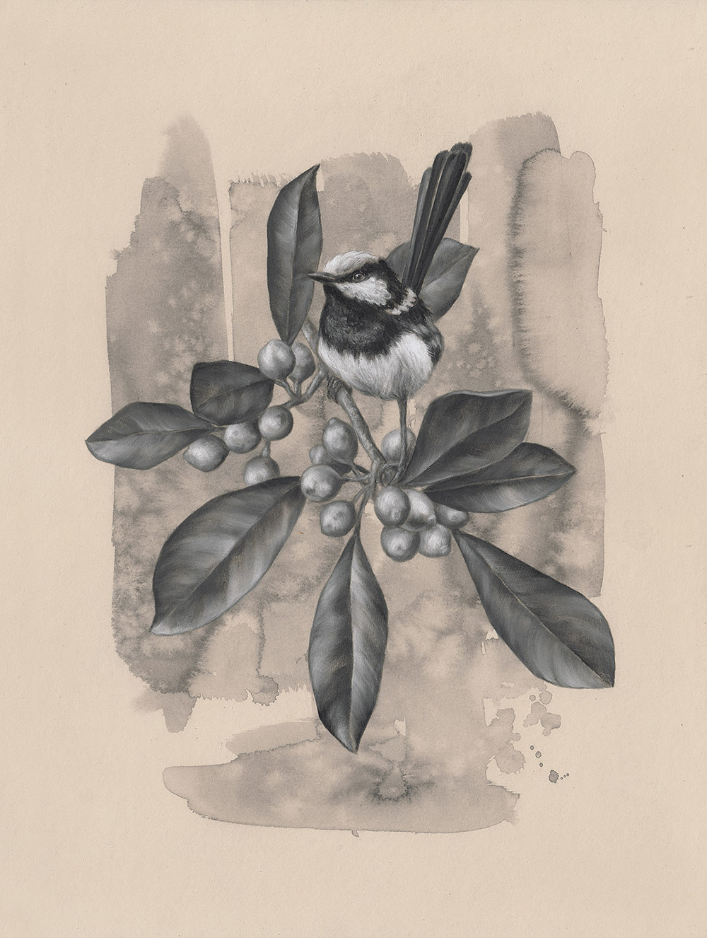 Male Wren: 6Series 1.6