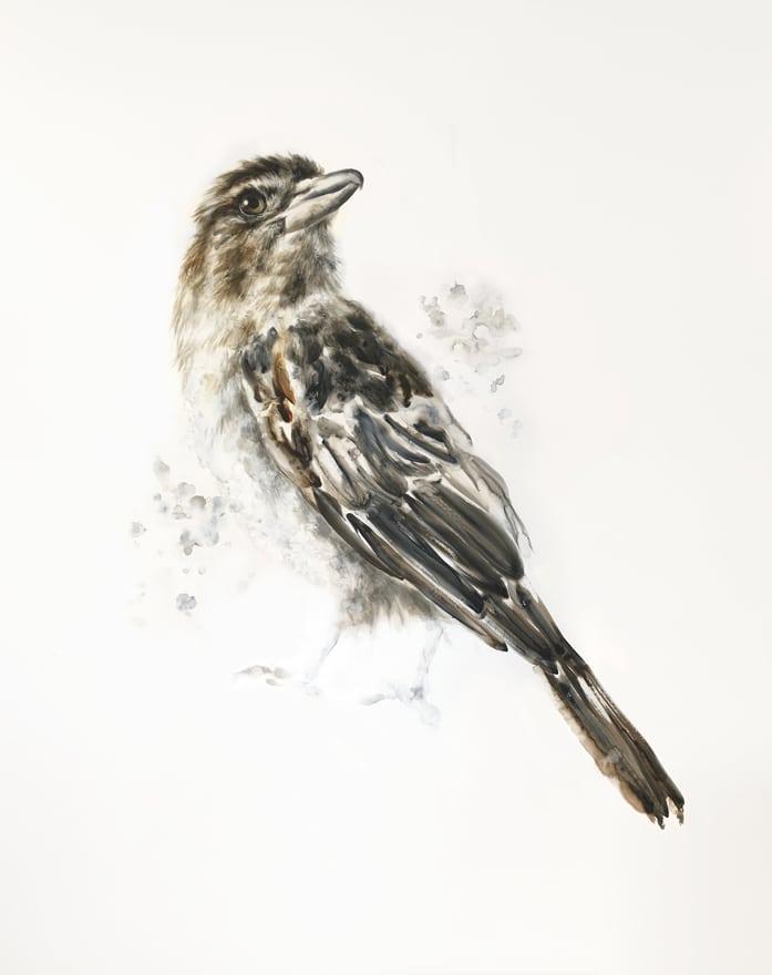 AlexLouisa-04-Butcherbird-95x120cm.jpg