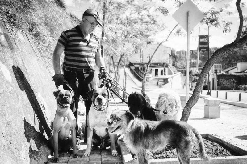 WILSON AND HIS RESCUE DOGS, GUAPULO