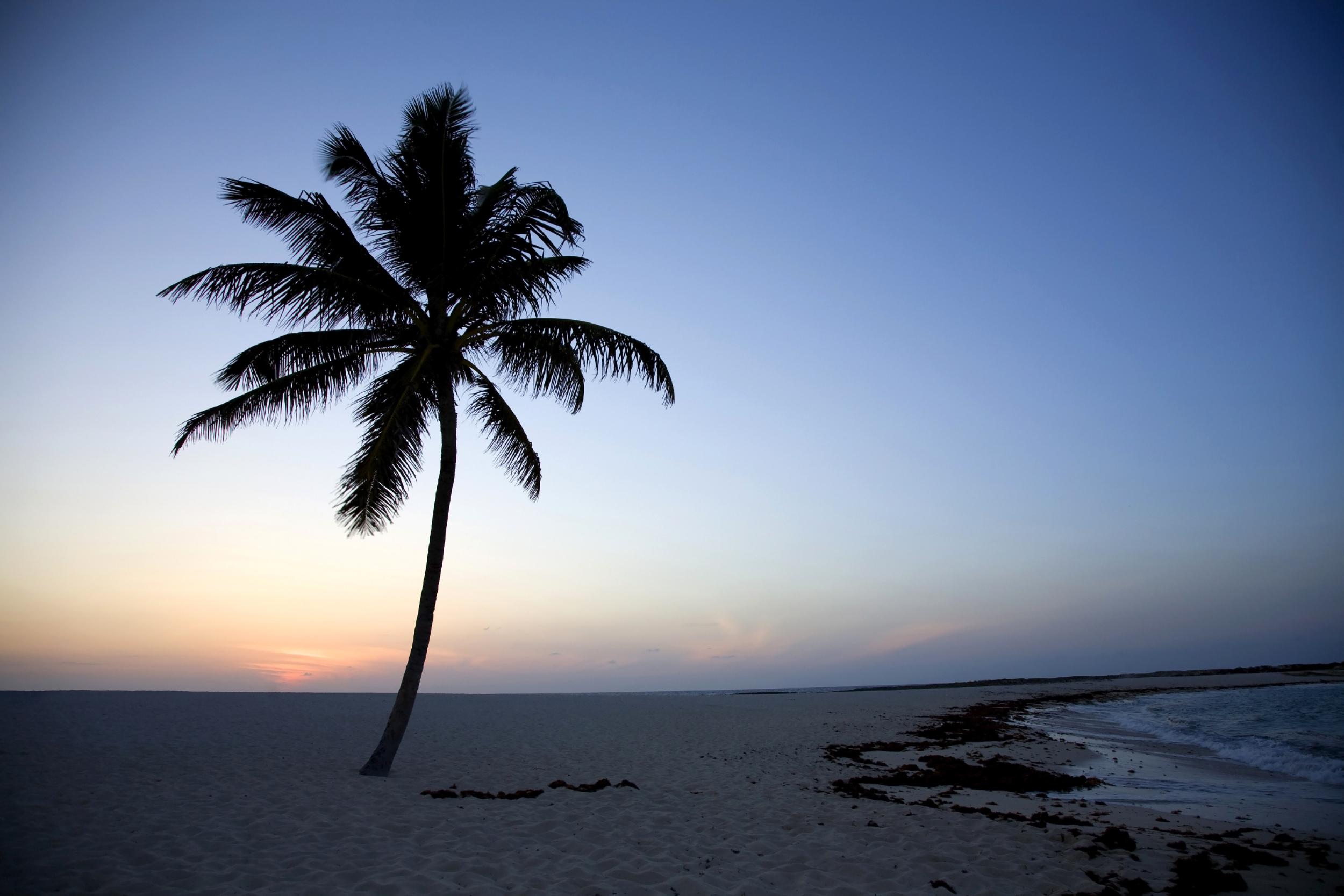 single palm tree productions