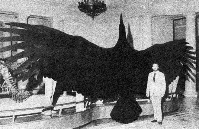 Full_sized_model_of_Argentavis_magnificens_-_The_largest_discovered_flying_bird.jpg