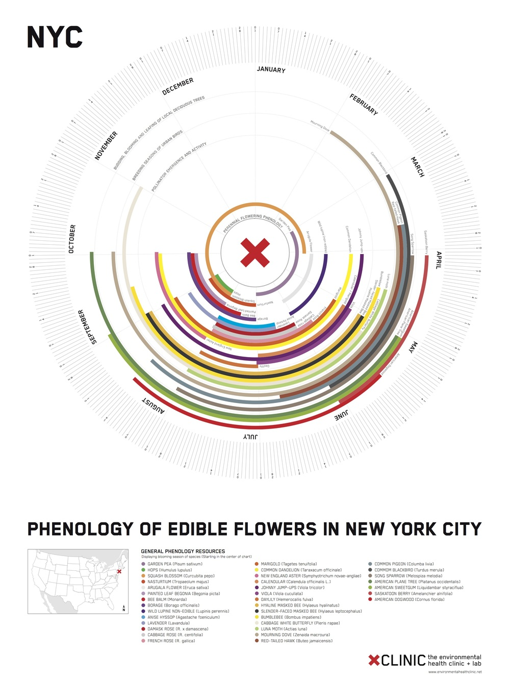 *NYC - Phen Clock - edible flowers.jpg