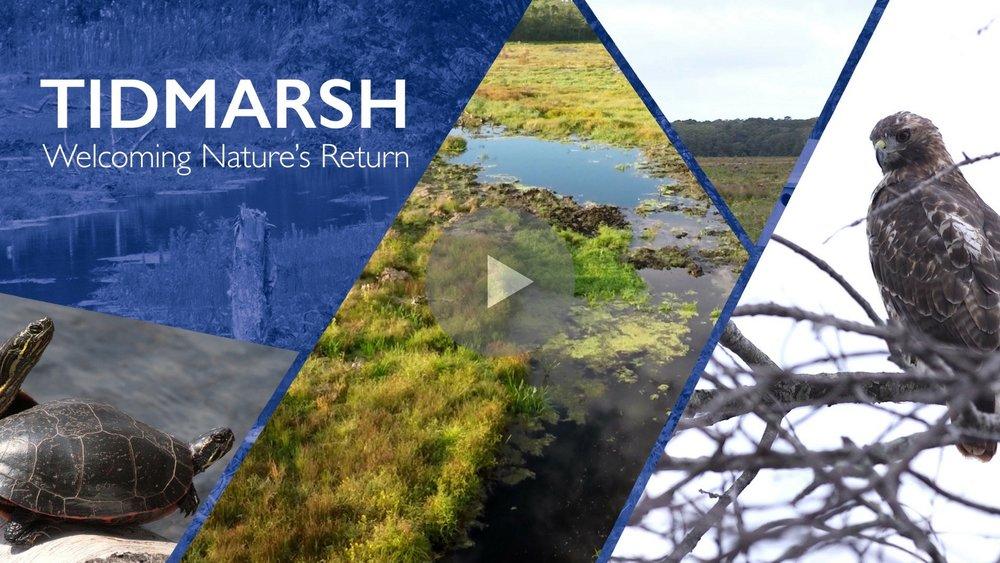 TIDMARSH: WELCOMING NATURE'S RETURN Produced for the Massachusetts Audubon Society,www.massaudubon.org