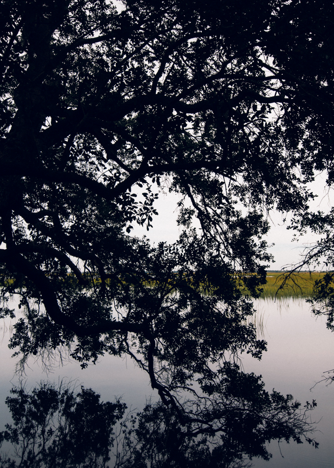 Oak on the Ashley River