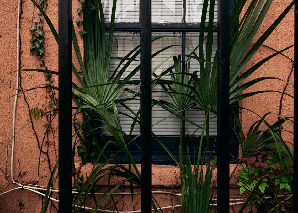charleston-overgrowth-window.jpg