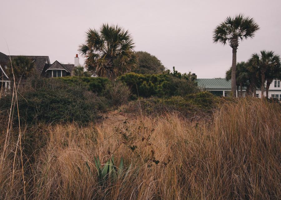 Sullivans Overgrowth, Sullivans Island