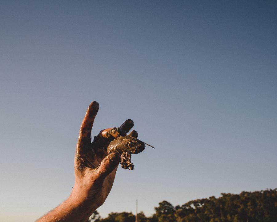edisto-mussel-harvesting-4.jpg