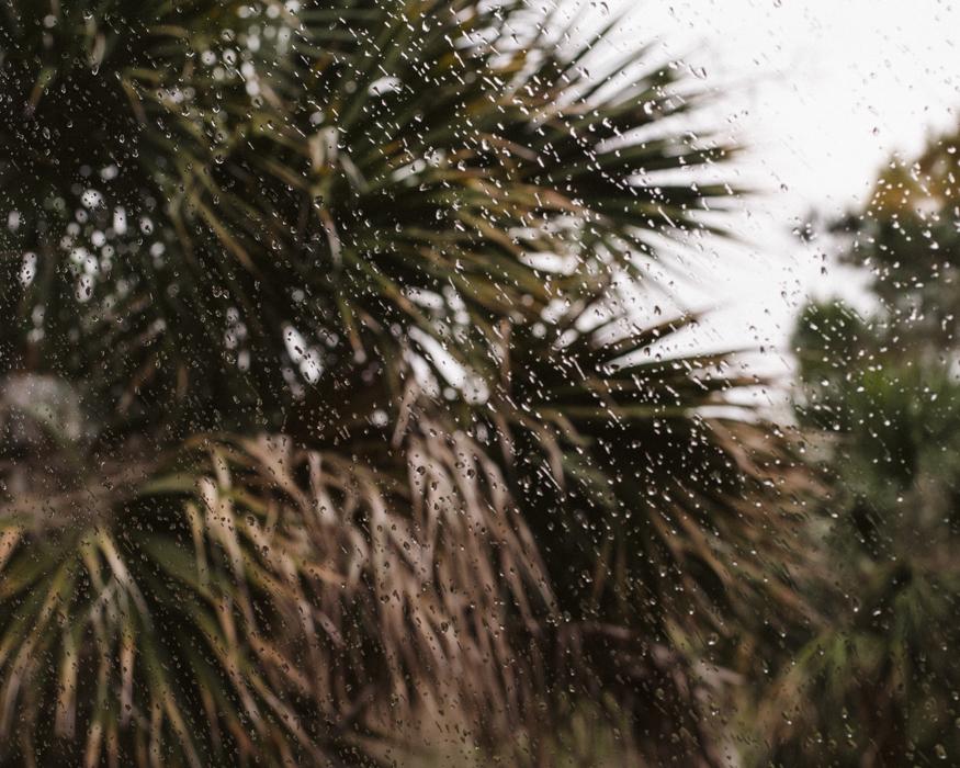 edisto-rain-palmetto-tree.jpg