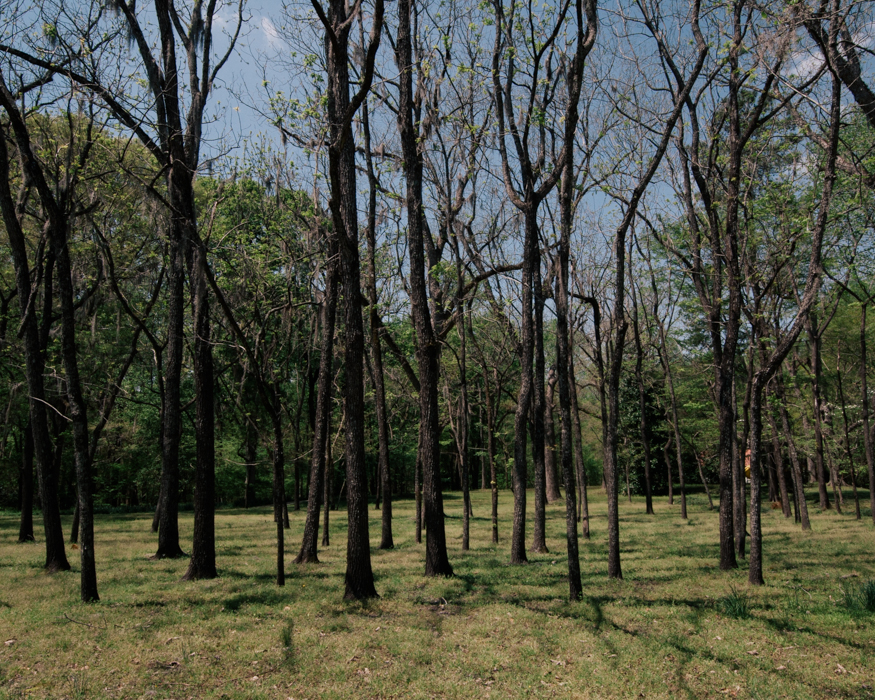 rural-road-mechanicsville-highway-darlington-county-trees.jpg