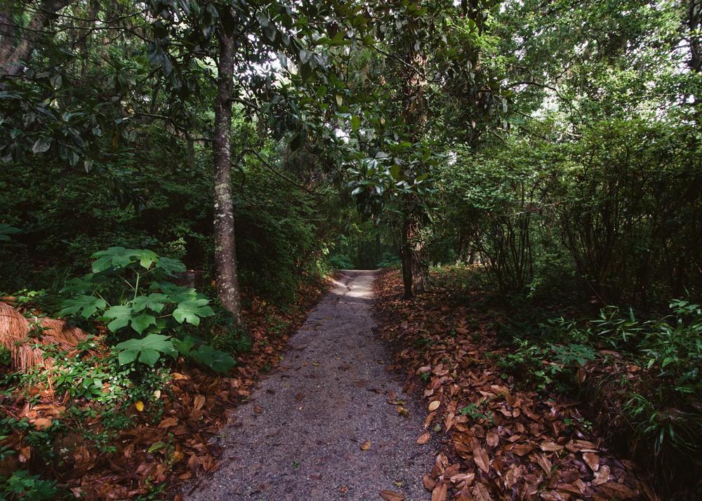 spoleto-finale-middleton-place-plantation-ashley-river-lowcountry-pathway.jpg