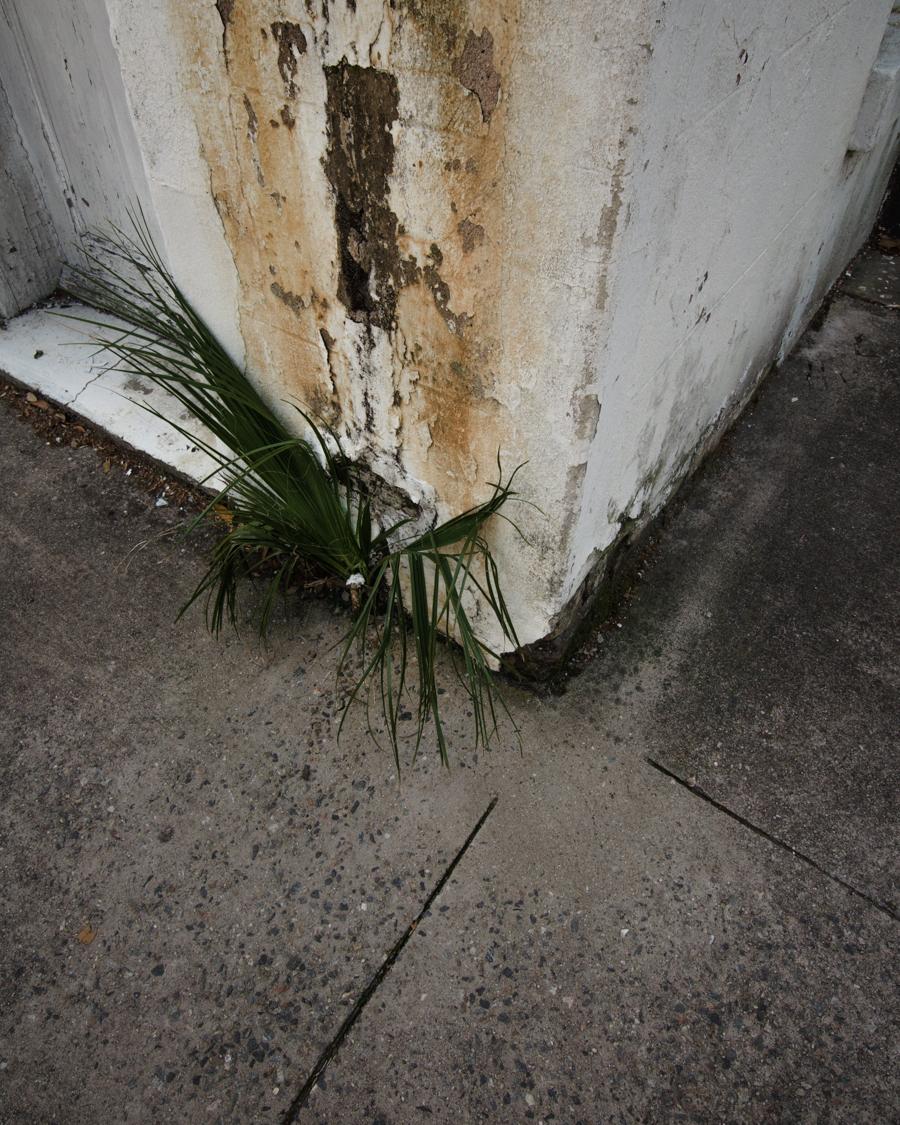 Savannah-corner-growth.jpg