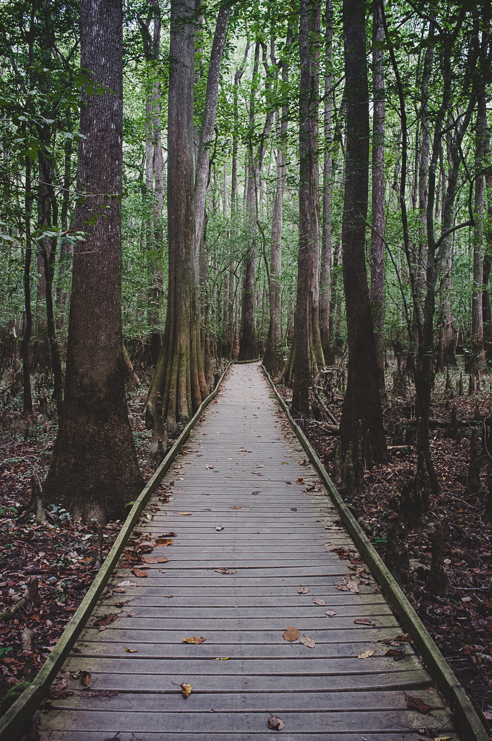 congaree-national-park-path-6.jpg