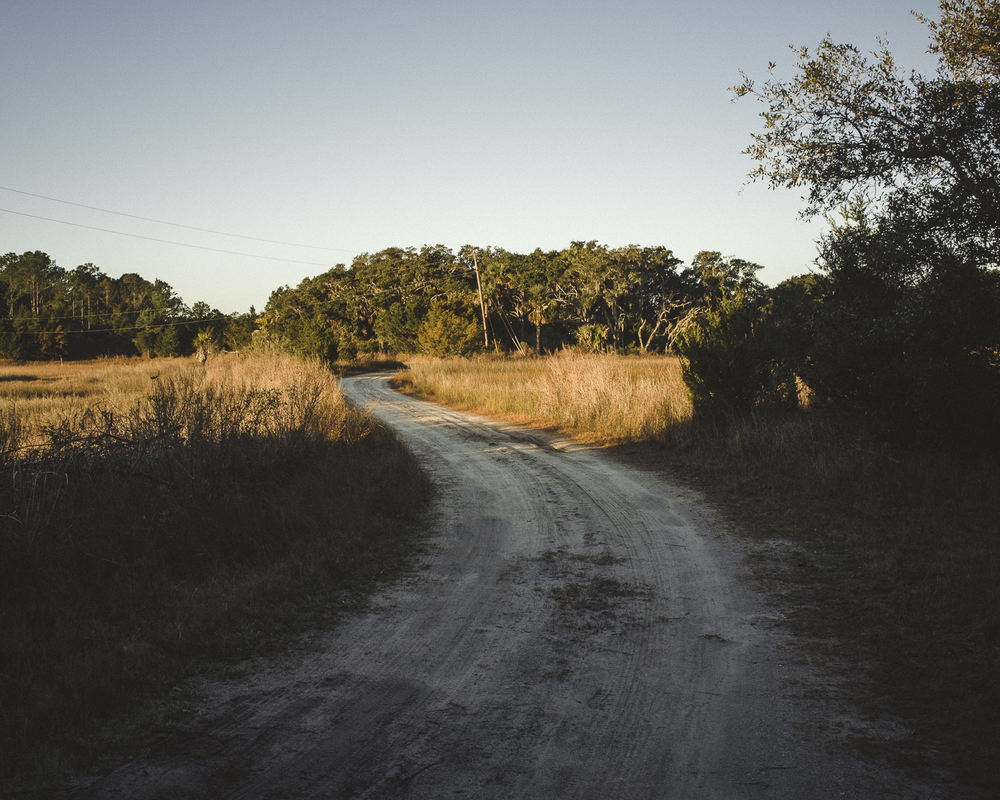 Driveway, Sweetgrass, Little Edisto Island, SC;  February 2015