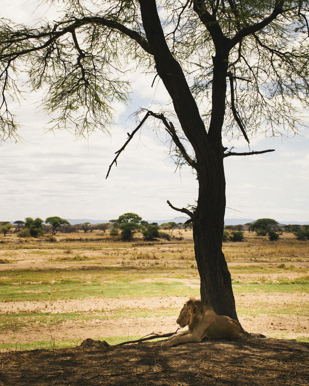 Ruaha National Park, Iringa;  November 2015