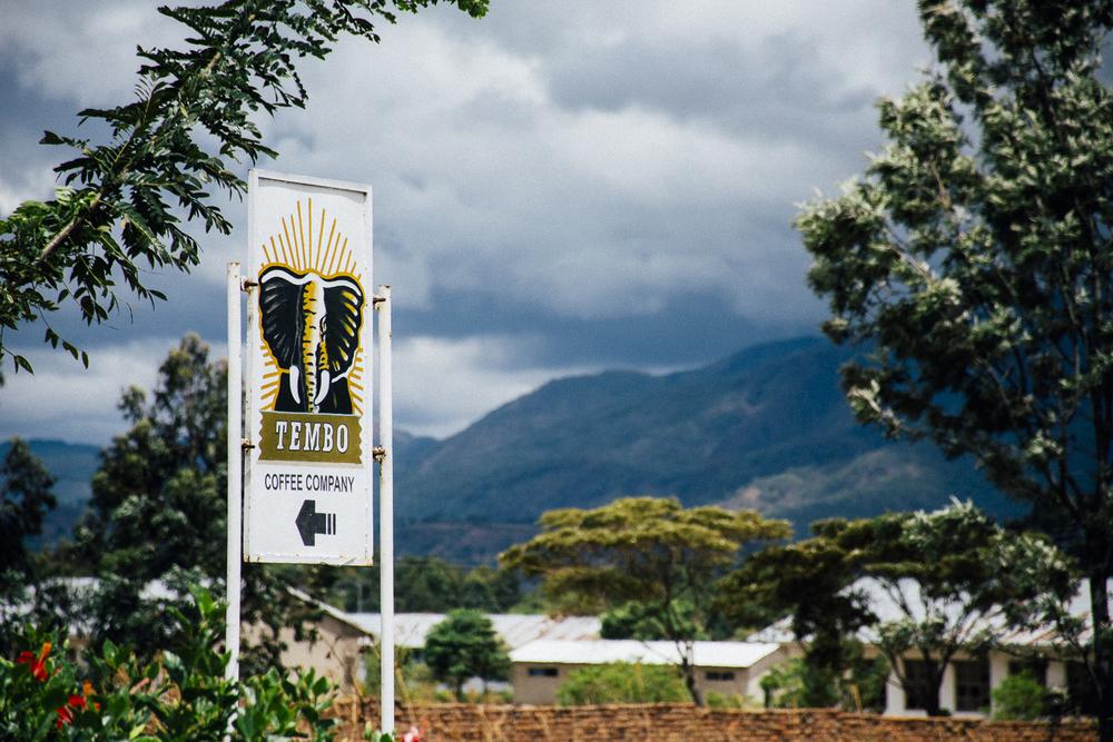 Tembo Coffee, Mbeya, Tanzania;November 2015