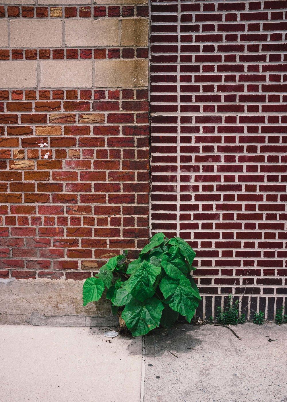 Gowanus, Brooklyn;2015