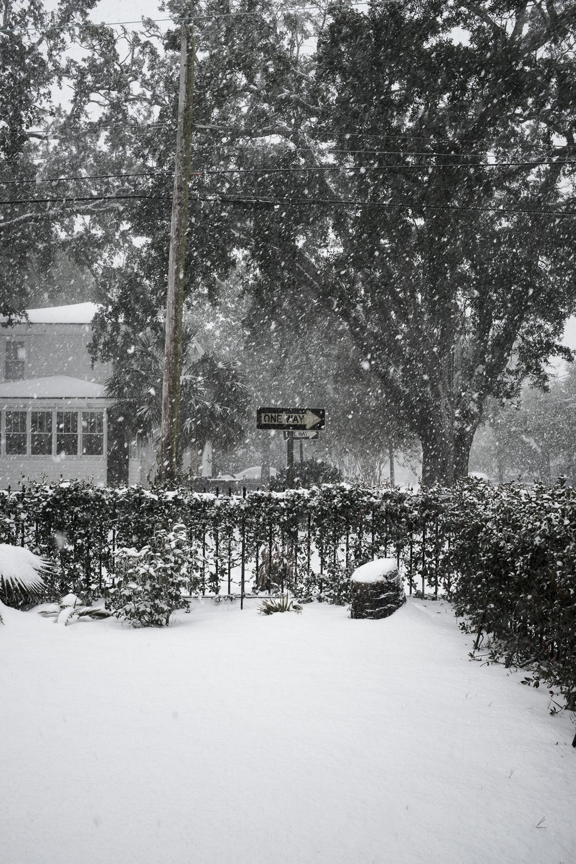 Ashley Ave, Hampton Park Terrace